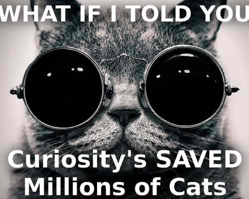 Curiosity-saved-the-cats