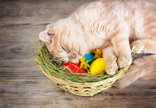 easter-cat-sleep
