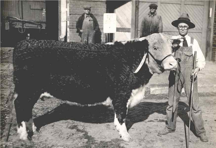 prize steer